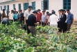 dr-ryu-yunpyong-of-hubei-ari-of-china-instructing-prunning-process-to-improve-cotton-production-july-2005