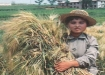 happy-young-lady-with-abundant-harvest-of-us-barley-variety-donated-by-awg-of-interaction-june1998