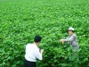kim-joo-inspecting-cotton-aphids-at-ryongpyungri-cotton-field-july-2005